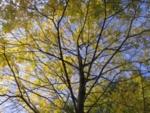 Write into fall